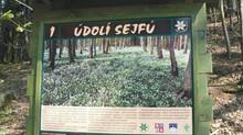Údolí Sejfu