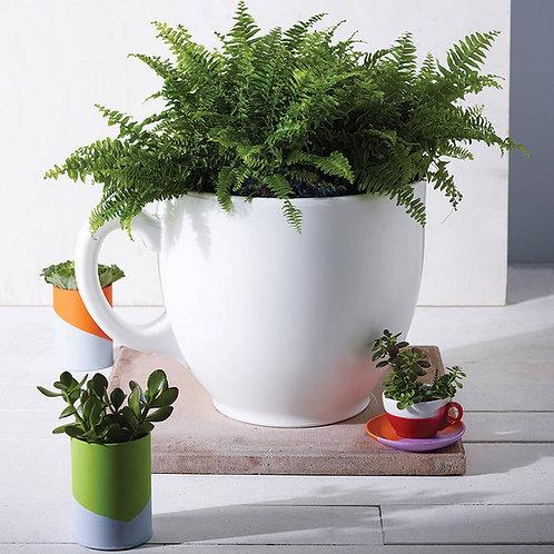 Tea Cup Planter - Various Colours