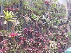 Jardín vertical .jpg