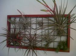 Cuadro Tillandsia rojo.jpg