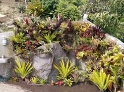 Jardin con Bromelias.jpg