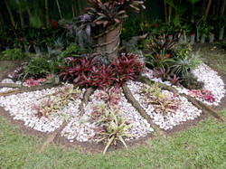 Grupo de Cryptanthus