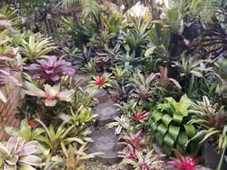 Jardin con Bromelias