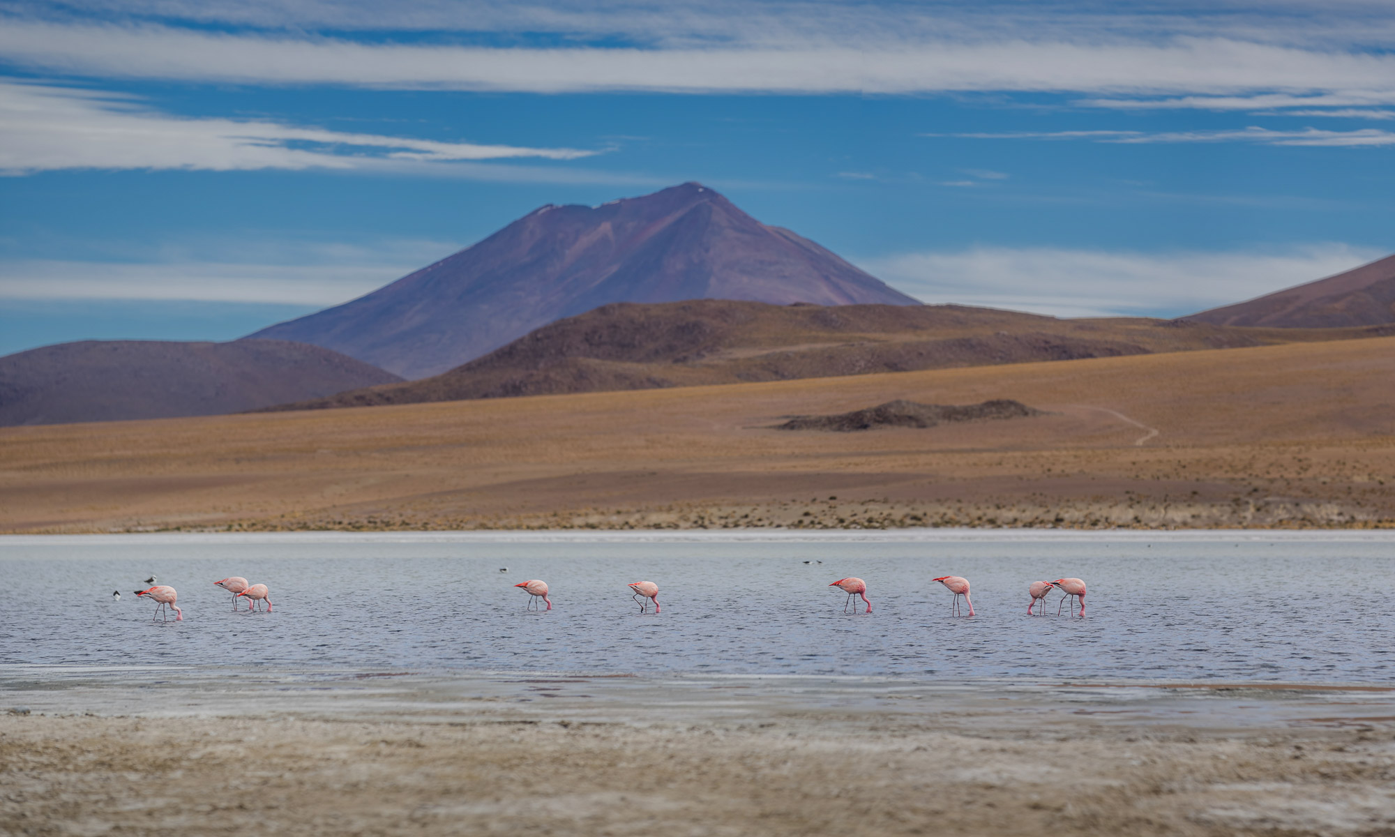 Flamingos at 14,000 feets