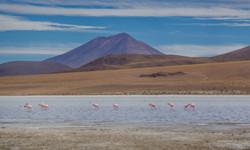 Flamingos at 14,000 feets
