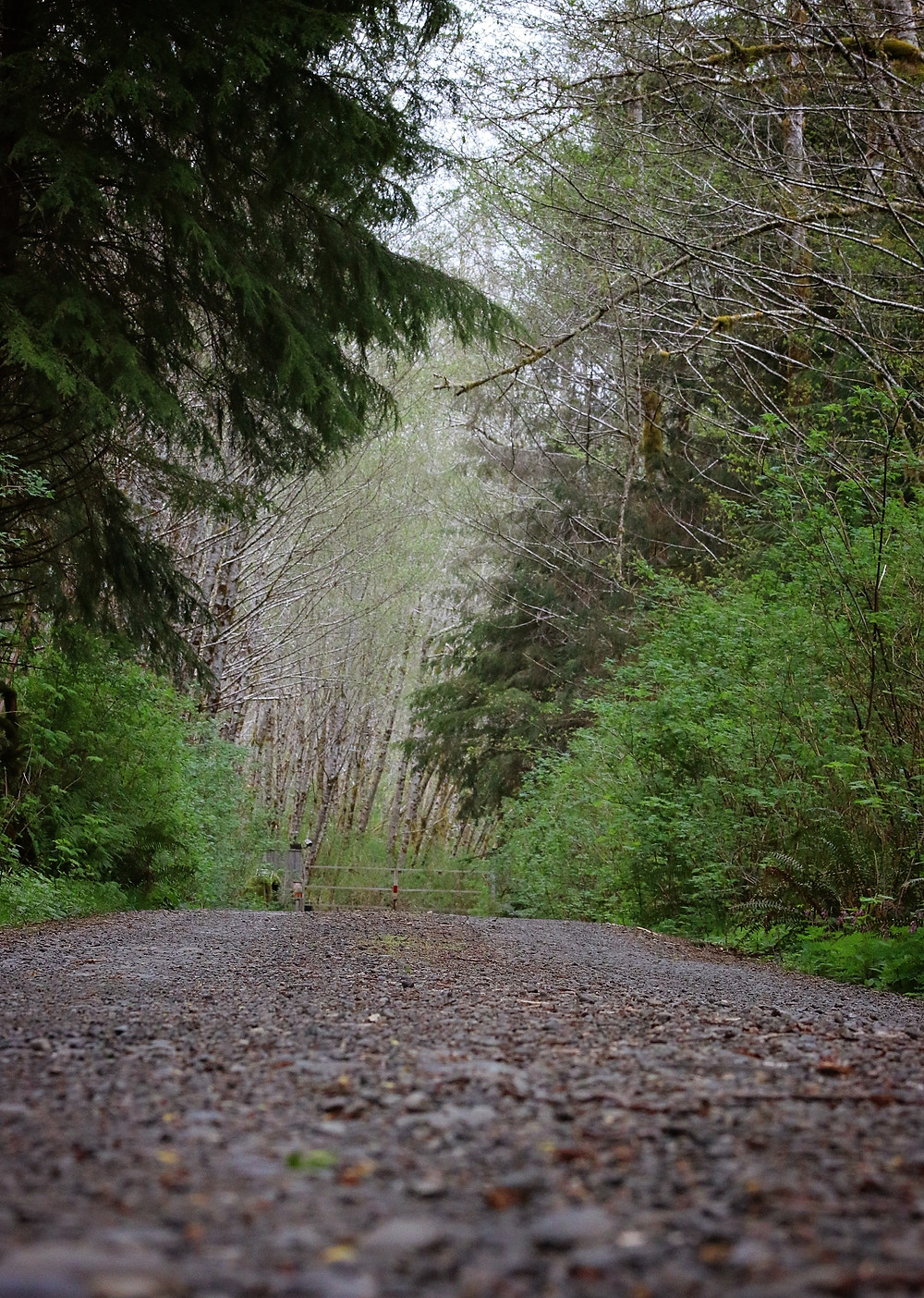 Olympic Peninsula Washington, 2015.