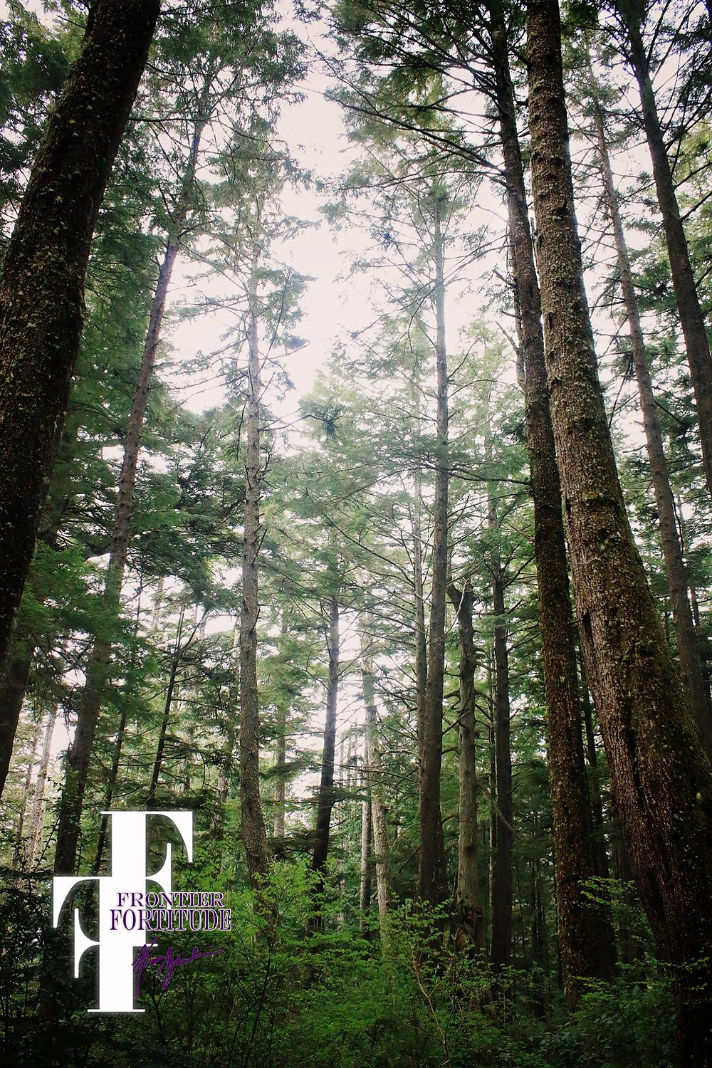 Olympic Peninsula Forest