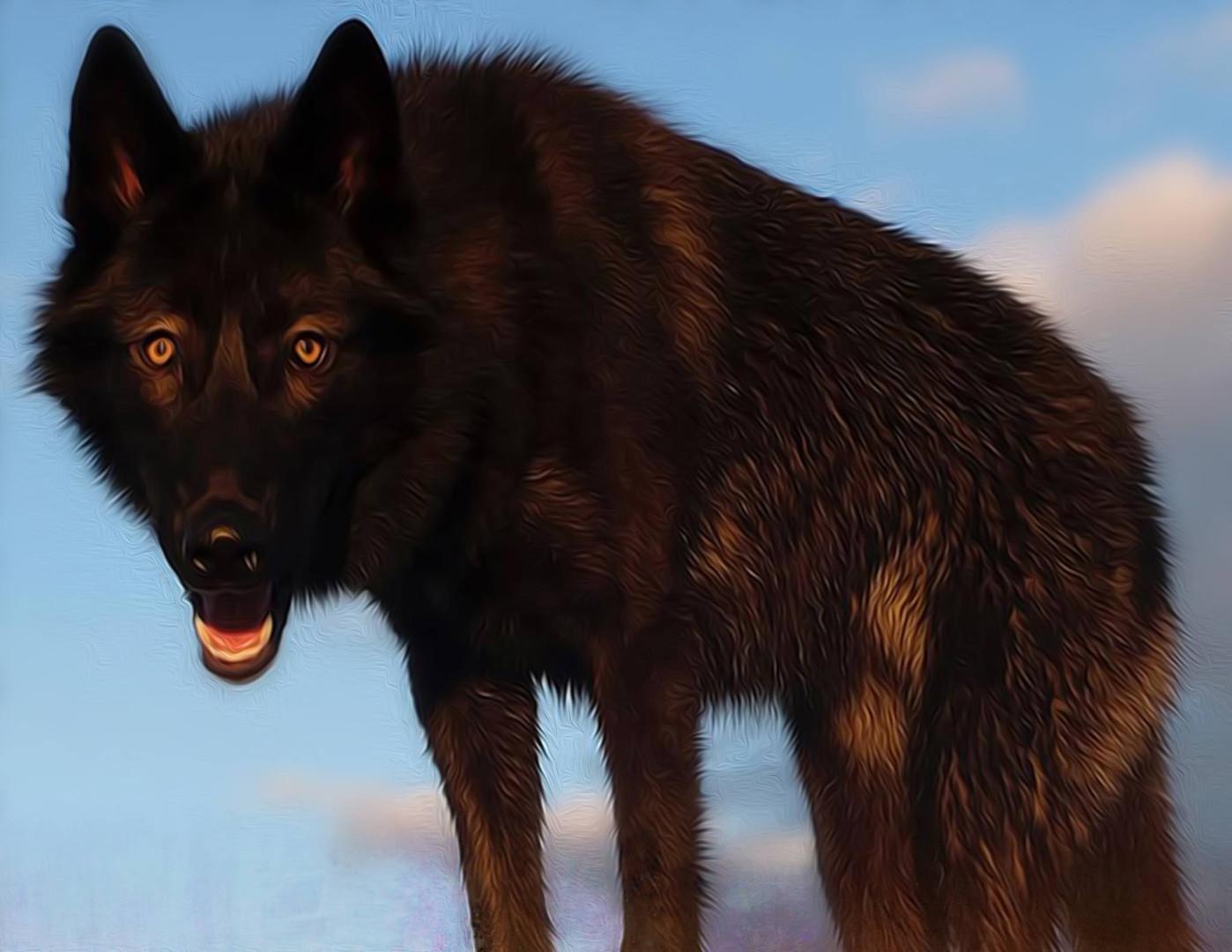 furiosa-the-wolfdog-in-NJ (16).jpg
