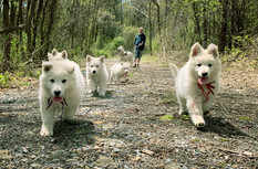 Phoenix (right) and Colossus (left) lead the pack
