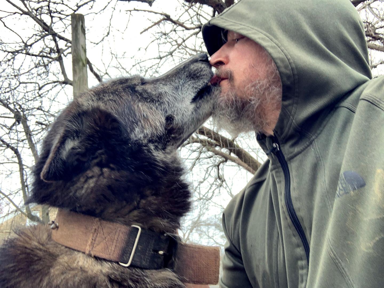 furiosa-the-wolfdog-in-NJ (8).jpg