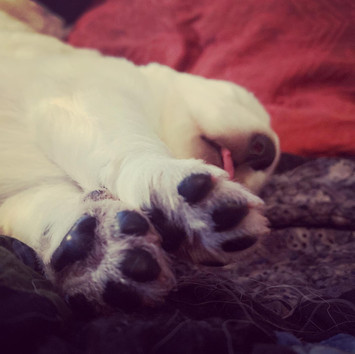 tiny toe beans!