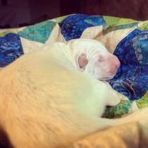 snuggled in a quilt