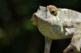Madagascar 2008-18-Edit-2.jpg