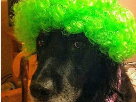 Keep furry friends safe this Halloween