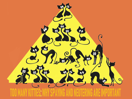 It's Spring! Time to Talk About Spaying and Neutering