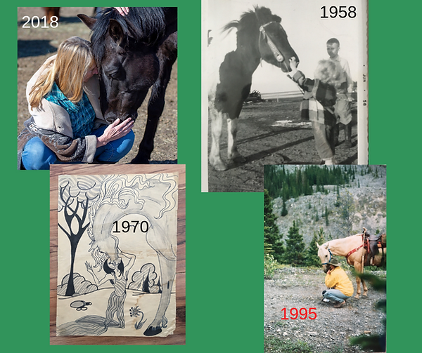 horse relationships over time.png