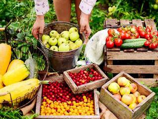 Sindicato rural promove curso de Fruticultura