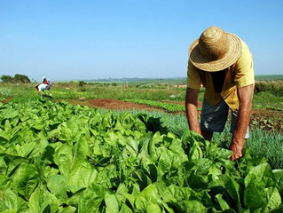 CNA e BB elaboram proposta para simplificar renegociação de dívidas dos produtores da área da Sudene