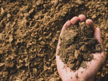 Utilização do esterco para adubação orgânica é opção sustentável nas propriedades