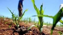 Dívida rural: Sindicato obtém liminar a favor da classe
