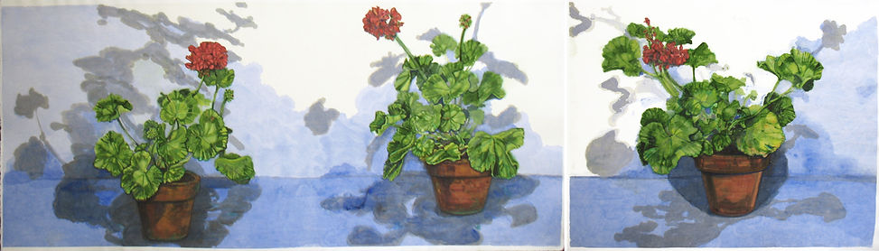 Pelargonium - Summer Geraniums, diptych_