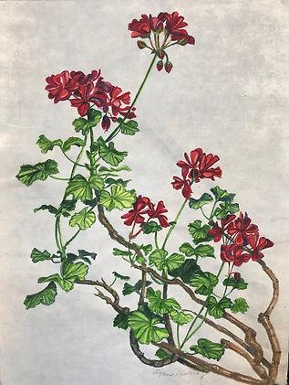Murray, Agnes_Pelargonium Cultivar.jpg