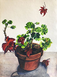 Murray_Agnes_Pelargonium - Geranium with