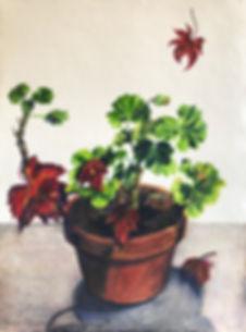 Murray_Agnes_Pelargonium - Geranium with