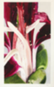 Flower of Pelargonium Sidoides 4.jpg