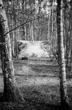 Film Forest Exhibition (16).jpg