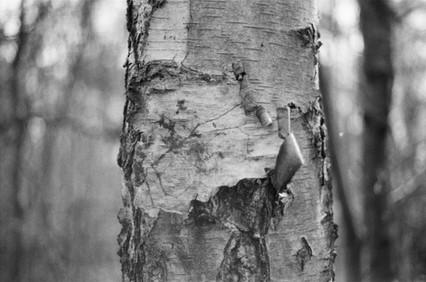 Film Forest Exhibition (18).jpg