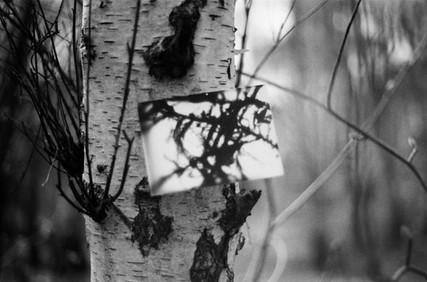 Film Forest Exhibition (19).jpg