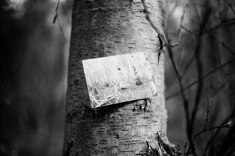 Film Forest Exhibition (26).jpg