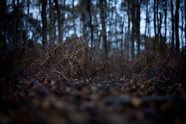 Dawn ferns