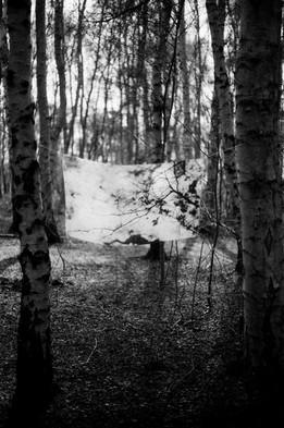 Film Forest Exhibition (9).jpg