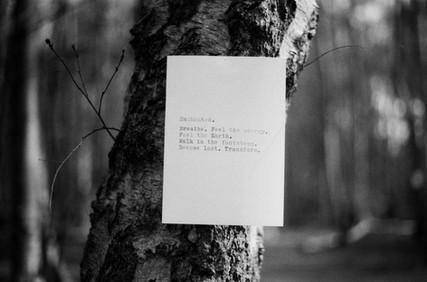 Film Forest Exhibition (14).jpg