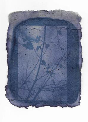 Dawn Cyanotype