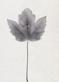 Lone Leaf 2019