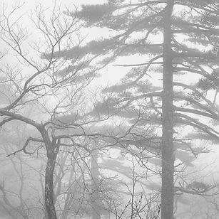 trees-in-mist-huangshan-china-16.jpg