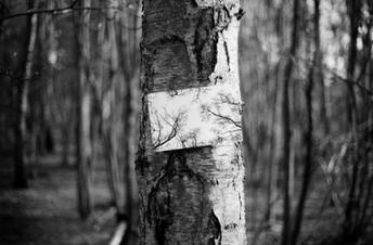 Film Forest Exhibition (4).jpg