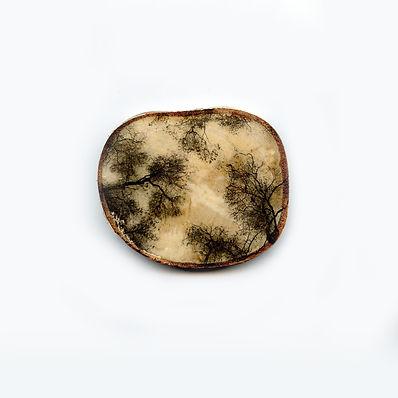 Tree wood3.jpg