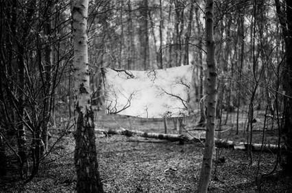 Film Forest Exhibition (21).jpg