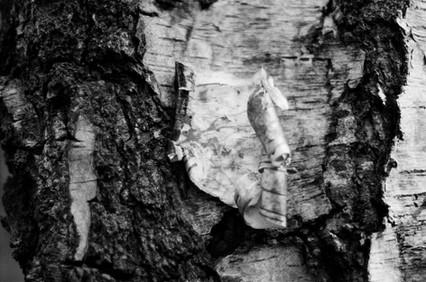 Film Forest Exhibition (25).jpg