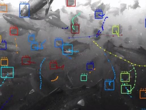 Alphabet's Tidal moonshot fish monitoring technology will improve world food supply