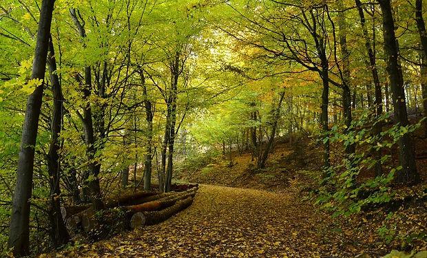 autumn-1007408_1920.jpg