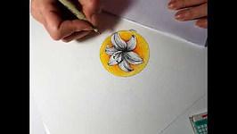 Lilium mandala time lapse