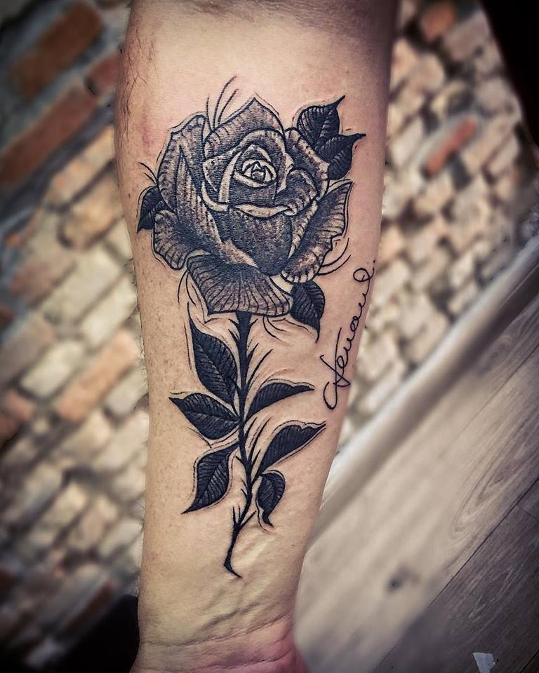 Rosa rascunho