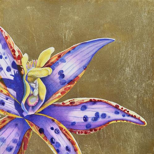 Eastern Queen of Sheba \ Thelymitra speciosa 3 \ Original Watercolour