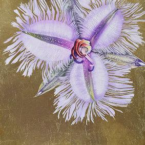Many-flowered Fringe Lily \ Thysanotus multiflorus 1 \ Original Watercolour