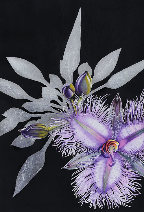 Many-flowered Fringe Lily \ Thysanotus multiflorus 2 \ Original Watercolour